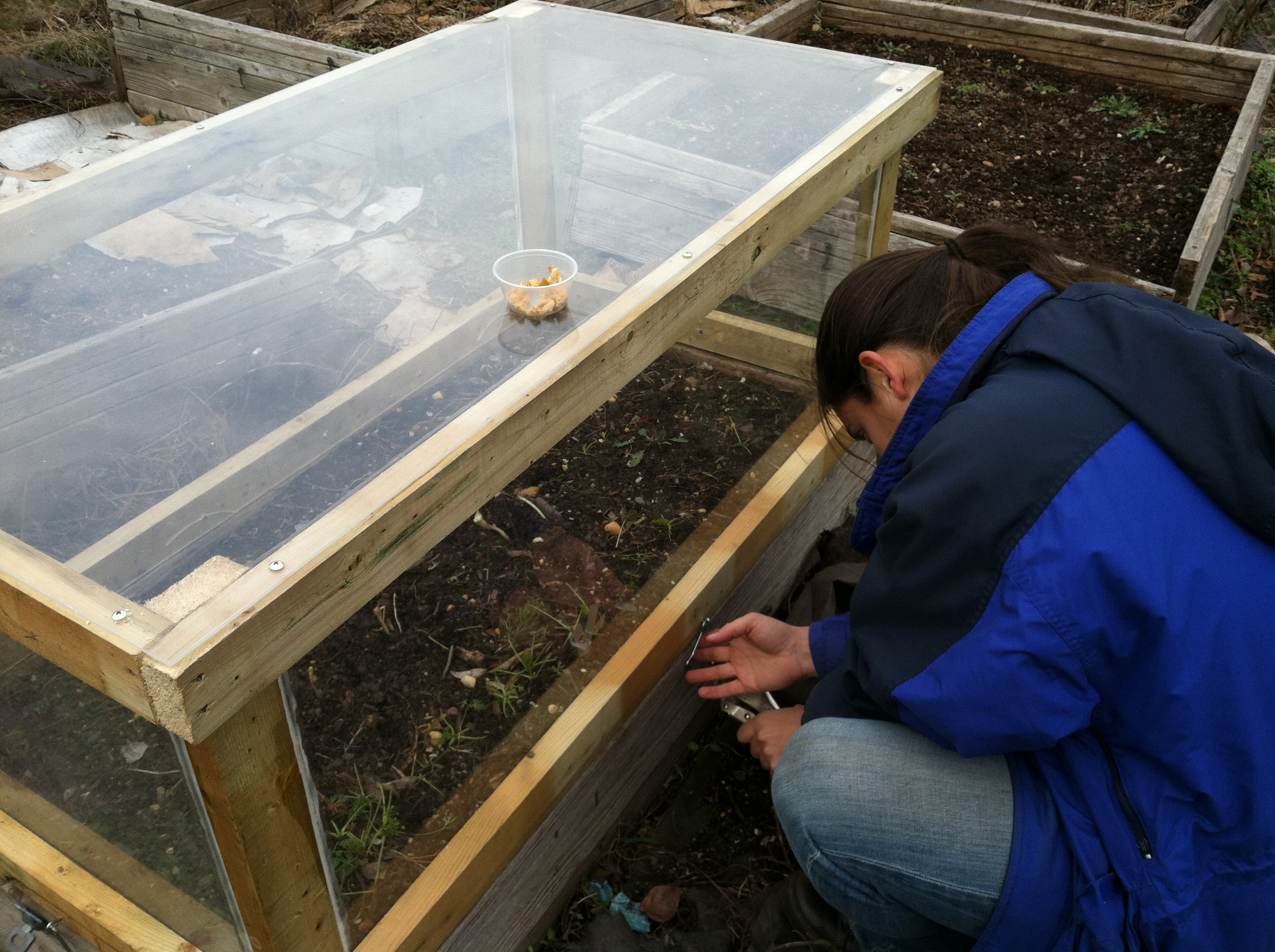 hook and eye latches attach the cold frame to the raised bed and help keep unwanted