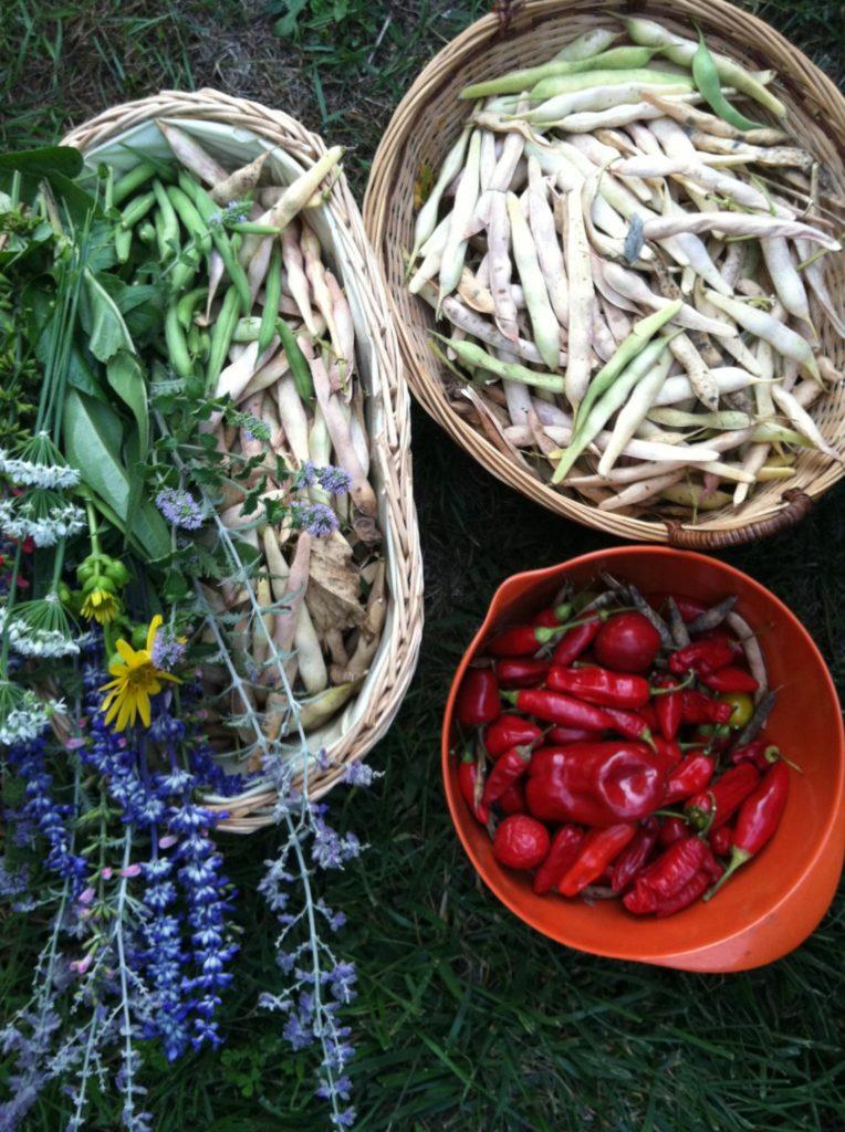 Herbs & Veggies